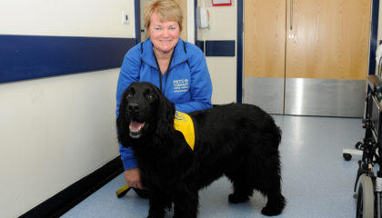 Pets as Therapy dog puts smiles on the faces of all at Royal Devon and Exeter Hospital